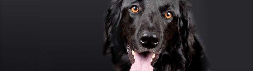 atypia-oncologia-veterinaria-granada-espana